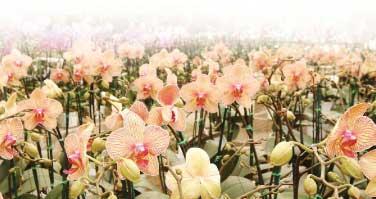 Senior Pictures Flower Field